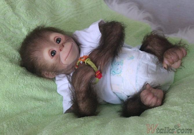 фото обезьянки домашние