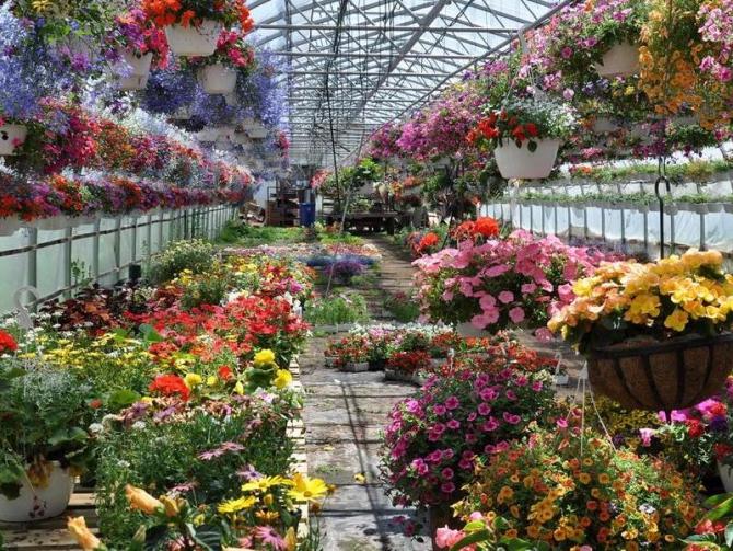 Цветы оранжерея